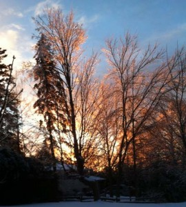 Gorgeous in the sunrise of Christmas morning, the iced trees strained under the weight of the ice.
